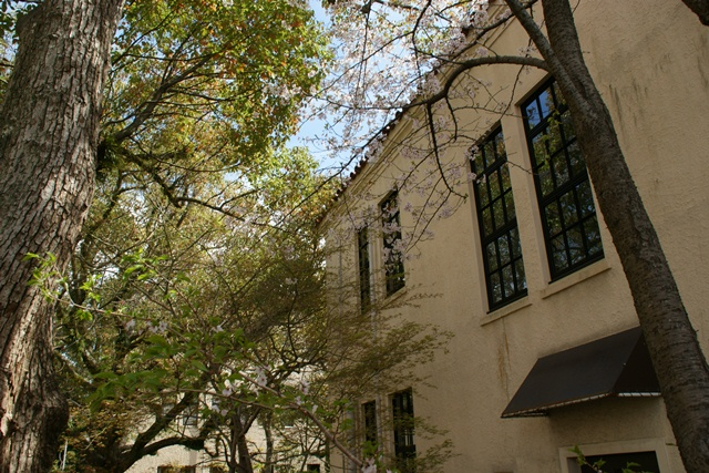 素敵な桜をさがして・・・関西学院大学の桜、夙川の桜、王子動物園の桜、九州の桜、お城の桜(3/7)_d0181492_2150139.jpg