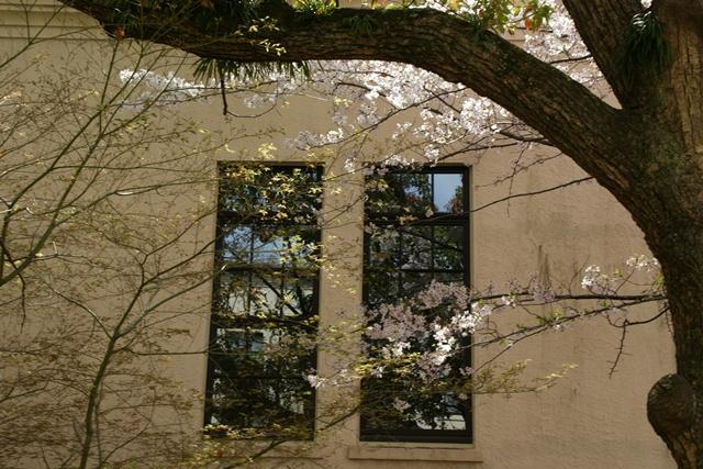 素敵な桜をさがして・・・関西学院大学の桜、夙川の桜、王子動物園の桜、九州の桜、お城の桜(3/7)_d0181492_21501766.jpg