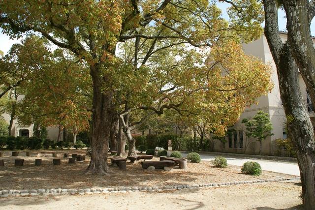 素敵な桜をさがして・・・関西学院大学の桜、夙川の桜、王子動物園の桜、九州の桜、お城の桜(3/7)_d0181492_21503188.jpg