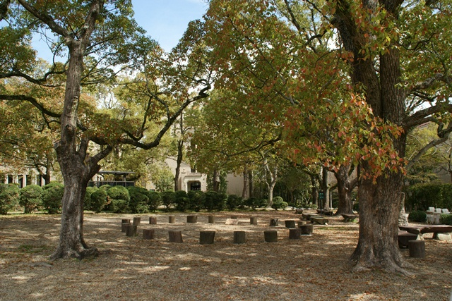 素敵な桜をさがして・・・関西学院大学の桜、夙川の桜、王子動物園の桜、九州の桜、お城の桜(3/7)_d0181492_21504585.jpg