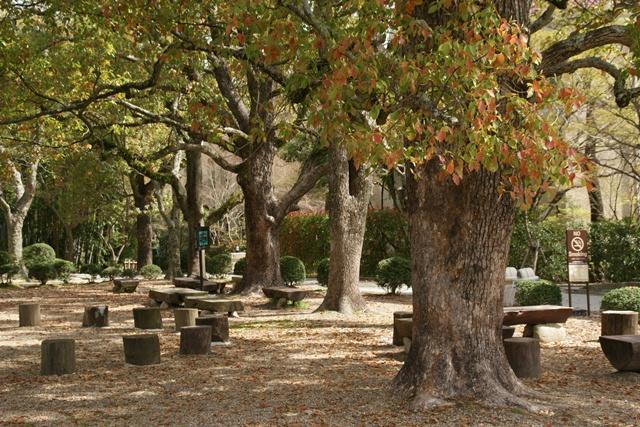 素敵な桜をさがして・・・関西学院大学の桜、夙川の桜、王子動物園の桜、九州の桜、お城の桜(3/7)_d0181492_21512865.jpg