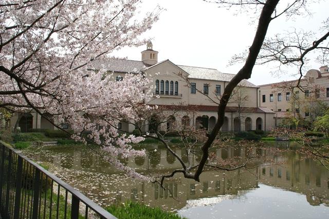 素敵な桜をさがして・・・関西学院大学の桜、夙川の桜、王子動物園の桜、九州の桜、お城の桜(3/7)_d0181492_21531596.jpg