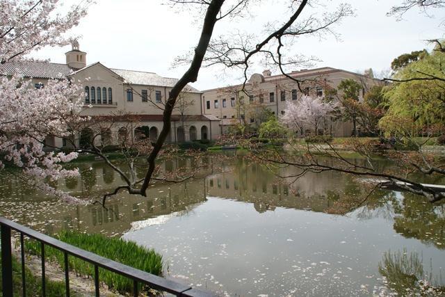 素敵な桜をさがして・・・関西学院大学の桜、夙川の桜、王子動物園の桜、九州の桜、お城の桜(3/7)_d0181492_21533225.jpg