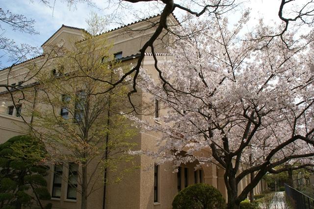 素敵な桜をさがして・・・関西学院大学の桜、夙川の桜、王子動物園の桜、九州の桜、お城の桜(3/7)_d0181492_21534867.jpg