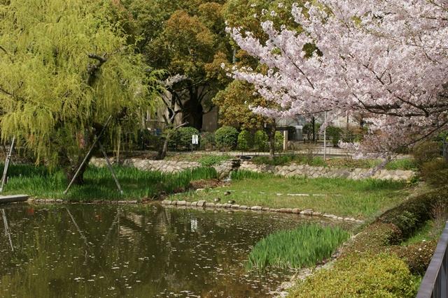 素敵な桜をさがして・・・関西学院大学の桜、夙川の桜、王子動物園の桜、九州の桜、お城の桜(3/7)_d0181492_21553559.jpg