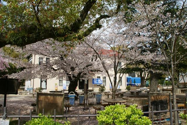 素敵な桜をさがして・・・関西学院大学の桜、夙川の桜、王子動物園の桜、九州の桜、お城の桜(3/7)_d0181492_21555991.jpg