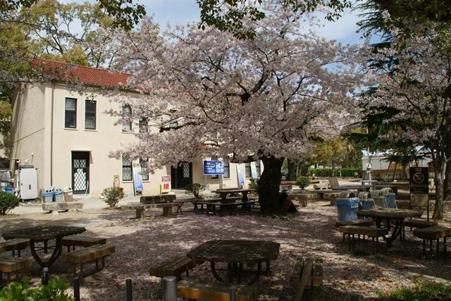 素敵な桜をさがして・・・関西学院大学の桜、夙川の桜、王子動物園の桜、九州の桜、お城の桜(3/7)_d0181492_21562924.jpg