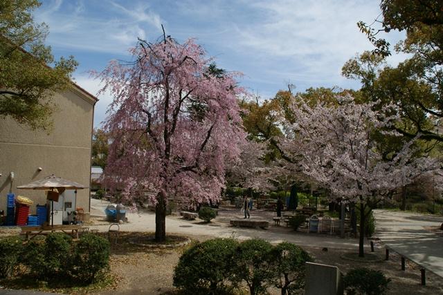 素敵な桜をさがして・・・関西学院大学の桜、夙川の桜、王子動物園の桜、九州の桜、お城の桜(3/7)_d0181492_21565632.jpg