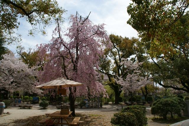 素敵な桜をさがして・・・関西学院大学の桜、夙川の桜、王子動物園の桜、九州の桜、お城の桜(3/7)_d0181492_2157894.jpg