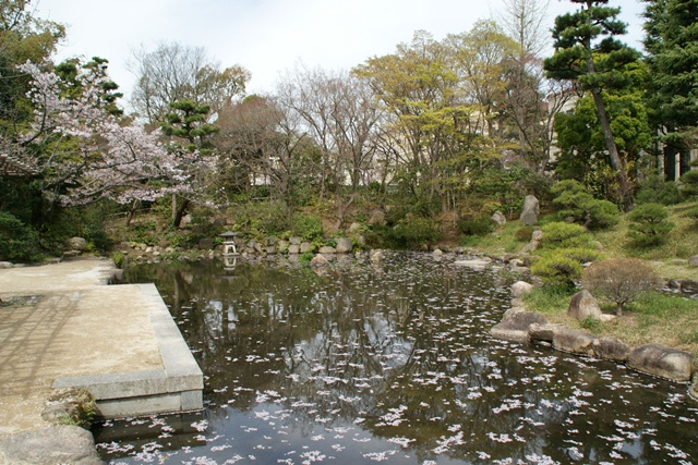 素敵な桜をさがして・・・関西学院大学の桜、夙川の桜、王子動物園の桜、九州の桜、お城の桜(3/7)_d0181492_2243857.jpg