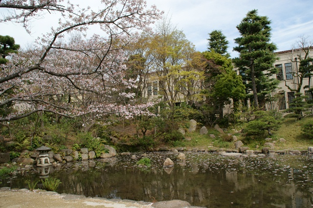 素敵な桜をさがして・・・関西学院大学の桜、夙川の桜、王子動物園の桜、九州の桜、お城の桜(3/7)_d0181492_2251963.jpg