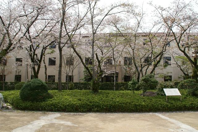 素敵な桜をさがして・・・関西学院大学の桜、夙川の桜、王子動物園の桜、九州の桜、お城の桜(3/7)_d0181492_225243.jpg