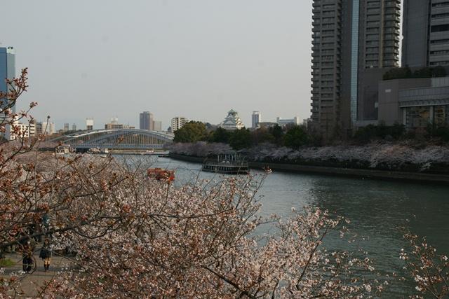 素敵な桜をさがして・・・・大阪城の桜、夙川の桜、王子動物園の桜、大学の桜、九州の桜(4/7)_d0181492_23205120.jpg