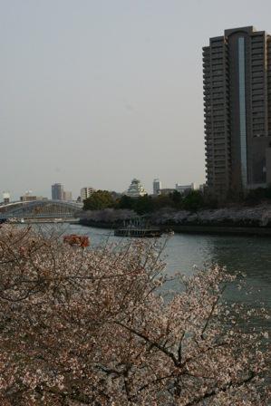 素敵な桜をさがして・・・・大阪城の桜、夙川の桜、王子動物園の桜、大学の桜、九州の桜(4/7)_d0181492_23212626.jpg