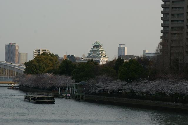 素敵な桜をさがして・・・・大阪城の桜、夙川の桜、王子動物園の桜、大学の桜、九州の桜(4/7)_d0181492_2321938.jpg