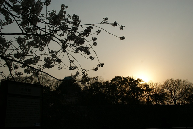 素敵な桜をさがして・・・・大阪城の桜、夙川の桜、王子動物園の桜、大学の桜、九州の桜(4/7)_d0181492_23221810.jpg