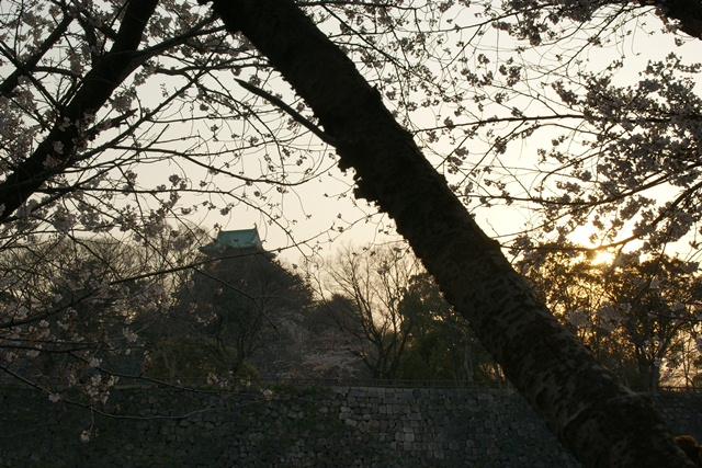 素敵な桜をさがして・・・・大阪城の桜、夙川の桜、王子動物園の桜、大学の桜、九州の桜(4/7)_d0181492_2322371.jpg