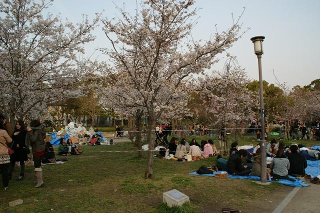素敵な桜をさがして・・・・大阪城の桜、夙川の桜、王子動物園の桜、大学の桜、九州の桜(4/7)_d0181492_23242536.jpg