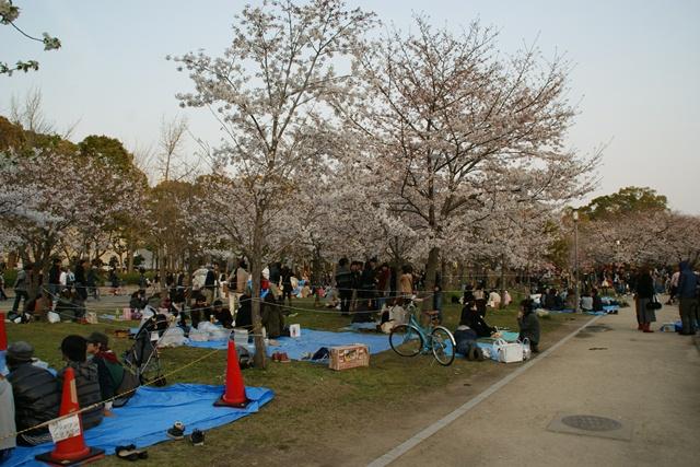 素敵な桜をさがして・・・・大阪城の桜、夙川の桜、王子動物園の桜、大学の桜、九州の桜(4/7)_d0181492_2324427.jpg
