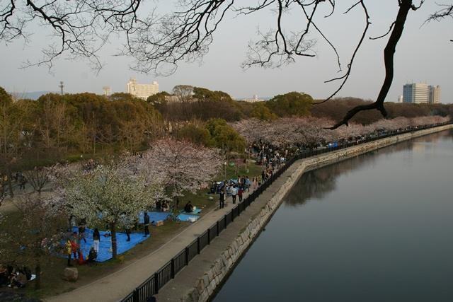 素敵な桜をさがして・・・・大阪城の桜、夙川の桜、王子動物園の桜、大学の桜、九州の桜(4/7)_d0181492_23262070.jpg