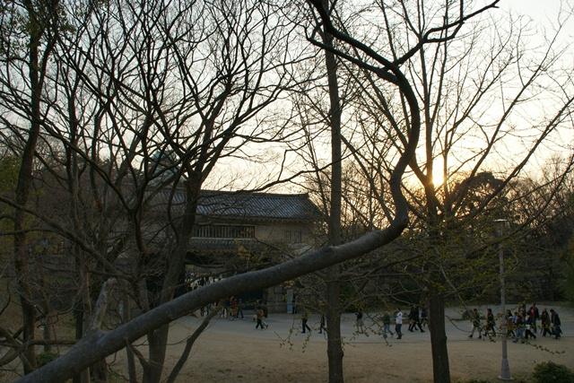 素敵な桜をさがして・・・・大阪城の桜、夙川の桜、王子動物園の桜、大学の桜、九州の桜(4/7)_d0181492_2326252.jpg