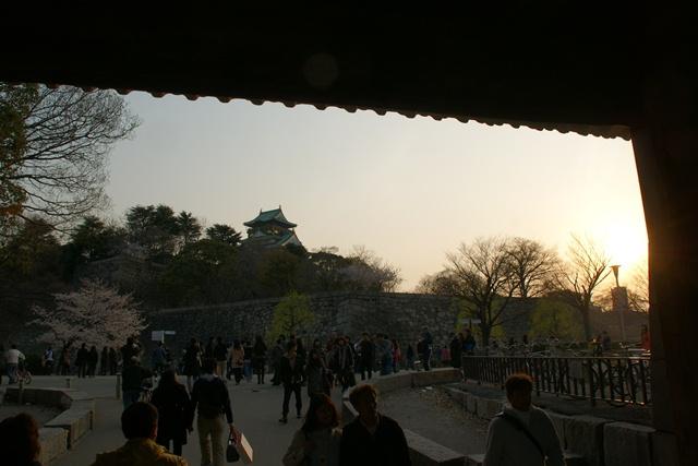 素敵な桜をさがして・・・・大阪城の桜、夙川の桜、王子動物園の桜、大学の桜、九州の桜(4/7)_d0181492_23263661.jpg