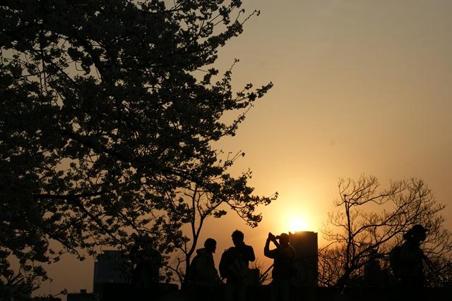 素敵な桜をさがして・・・・大阪城の桜、夙川の桜、王子動物園の桜、大学の桜、九州の桜(4/7)_d0181492_23304617.jpg