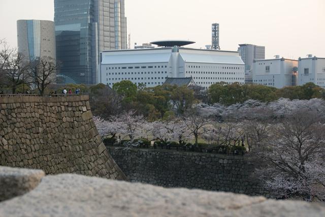 素敵な桜をさがして・・・・大阪城の桜、夙川の桜、王子動物園の桜、大学の桜、九州の桜(4/7)_d0181492_23335116.jpg