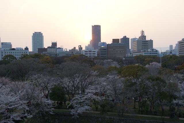 素敵な桜をさがして・・・・大阪城の桜、夙川の桜、王子動物園の桜、大学の桜、九州の桜(4/7)_d0181492_23342335.jpg