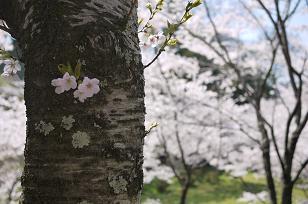 日本の春_f0226293_9241428.jpg