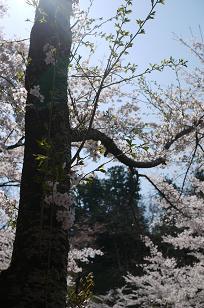 日本の春_f0226293_9243678.jpg
