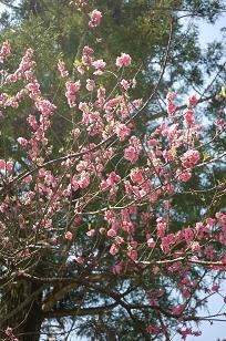 日本の春_f0226293_9253766.jpg
