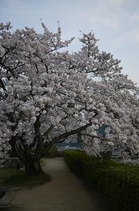 日本の春_f0226293_9265451.jpg