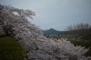 日本の春_f0226293_9272272.jpg