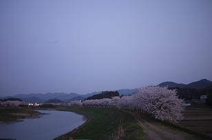日本の春_f0226293_9294141.jpg