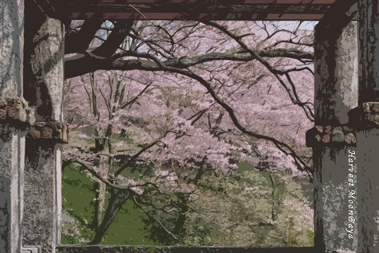 SAKURA~桜絵_b0208495_21461022.jpg