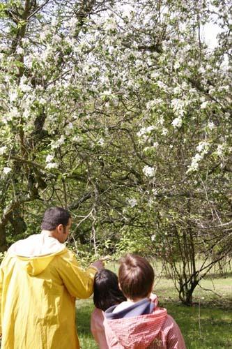 地上の豊かさ~春の森_f0106597_17343455.jpg