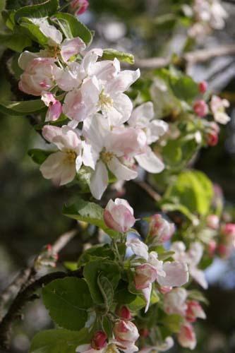 地上の豊かさ~春の森_f0106597_17555251.jpg