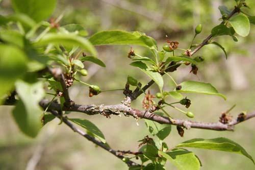 地上の豊かさ~春の森_f0106597_18254462.jpg
