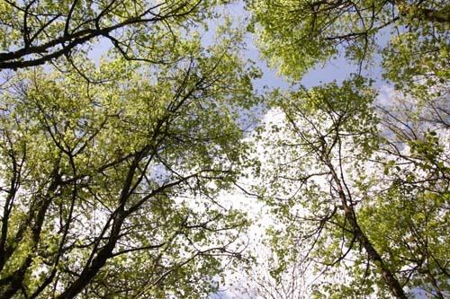 地上の豊かさ~春の森_f0106597_1830258.jpg