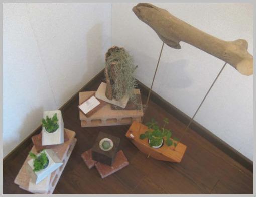 癒しの植物展4_f0143397_15585861.jpg