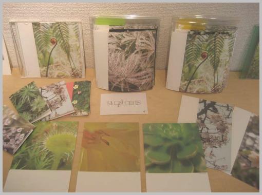 癒しの植物展4_f0143397_1653939.jpg
