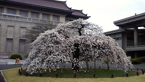 「ボストン美術館 日本美術の至宝」@東京国立博物館_c0153302_3361596.jpg