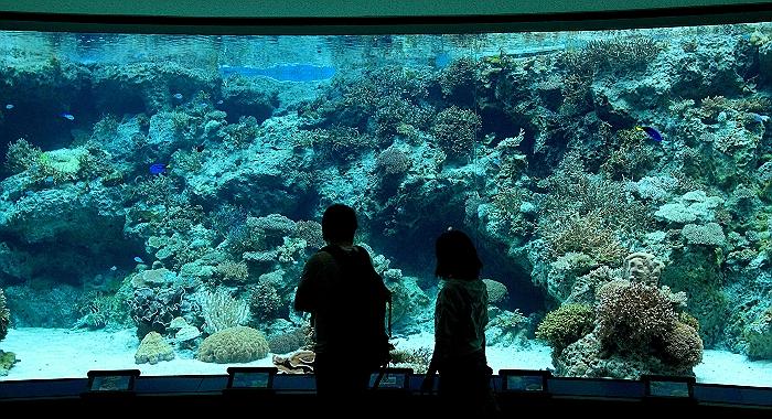 """沖縄 """"美ら海水族館"""" NO.1_a0140608_2223531.jpg"""