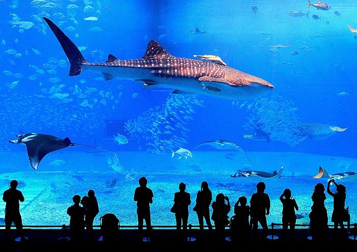"""沖縄 """"美ら海水族館"""" NO.1_a0140608_22254326.jpg"""