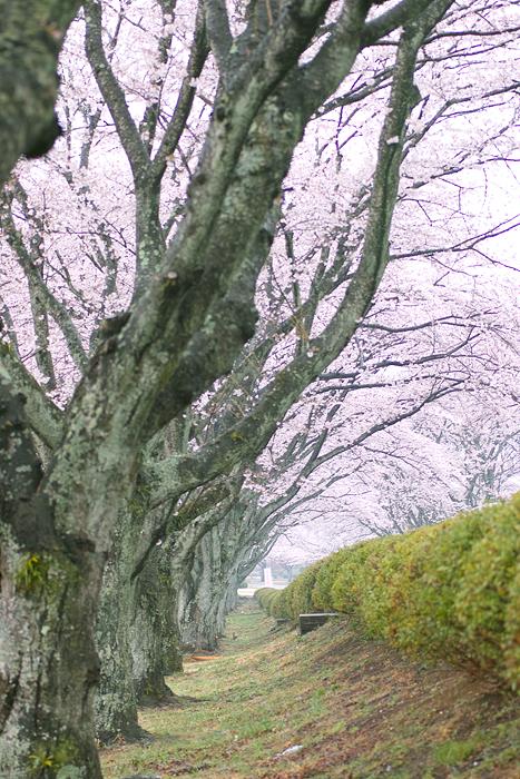 桜色_d0127209_21334923.jpg