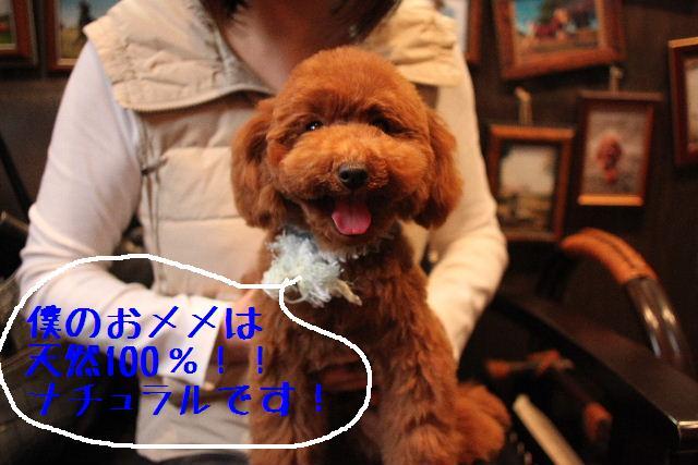 b0130018_22181083.jpg