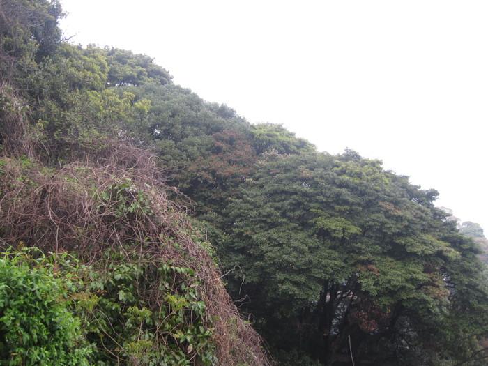 雨の「ガーデンふぁーむ」で~☆_a0125419_8501716.jpg