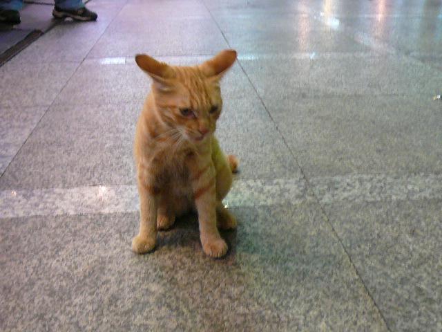 世界の猫 写真館 in 台湾_e0237625_2256142.jpg