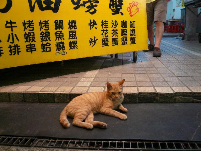 世界の猫 写真館 in 台湾_e0237625_2256947.jpg